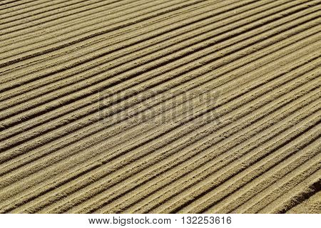closeup of a striped pattern in brown sand
