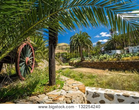 Palmtrees, flowers and homes in Betancuria, an old capital of Fuerteventura, Canary islands, Spain