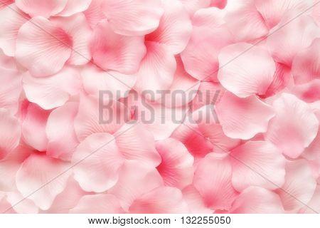 Beautiful Delicate Pink Rose Petal Background