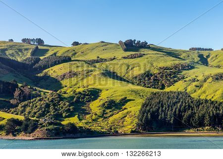 Beautiful landscape of the New Zealand - hills covered by green grass with herds of sheep -near Dunedin at Otago Region Southern island New Zealand