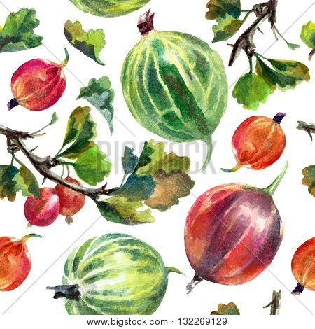 Watercolor pattern with gooseberries isolated on white background. Print