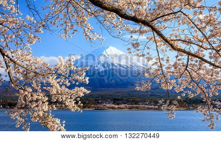 Mt.Fuji and Cherry Blossom at lake KawaguchikoYamanashiJapan