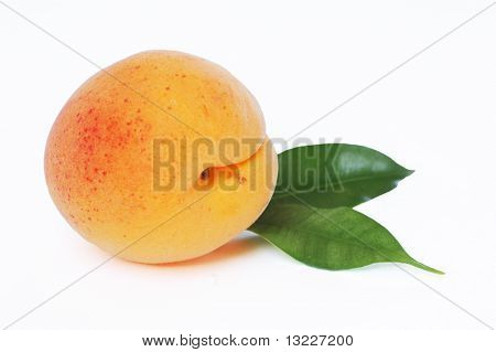 One Apricot on white Background