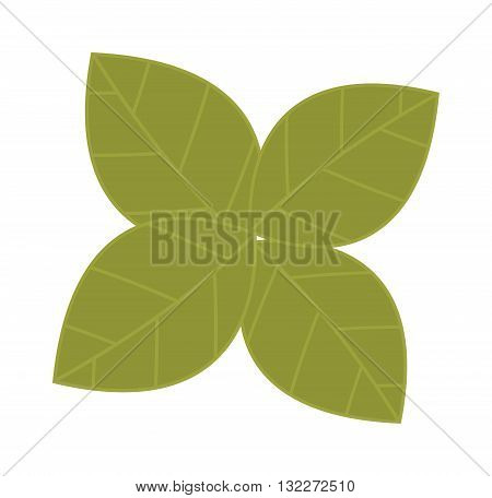 Fresh green lettuce salad leafs isolated on a white. Food fresh salad vegetable leafs nutrition vector. Cartoon vegetable lettuce leafs green fresh food. Lettuce health vitamin leafs