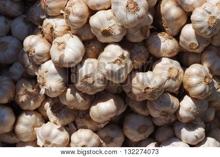 Garlic on market, Allium sativum, commonly known as garlic, is a species in the onion genus, Allium. Its close relatives include the onion, shallot