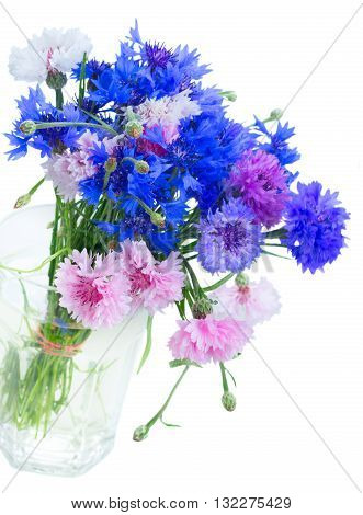 Posy of fresh blue, pink and violet cornflowers isolated on white background