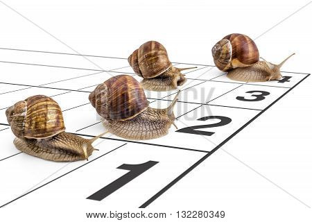 Four garden snails (Helix aspersa) race ona the running track on white background. Teamwork concept, competition.