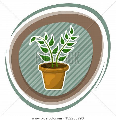 Indoor plant colorful icon. Vector illustration in cartoon style