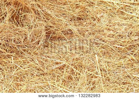 The dry yellow hay grass Background texture