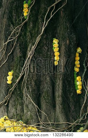 Tangled leafless vines creeping up an old tree trunk with floral decoration of yellow rose flowers