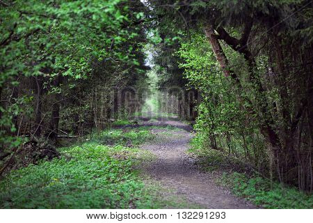 path in the green sunny forest reserve in elk island