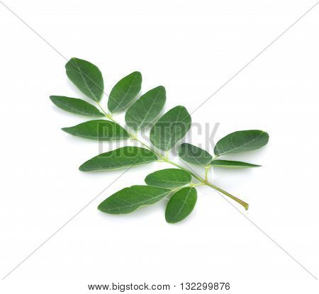 Moringa leaves over white background leaf green