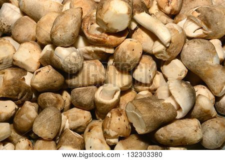 fresh mushrooms, Fresh mushrooms purchased from a store or harvested from the wild can be used many months later if stored correctly.
