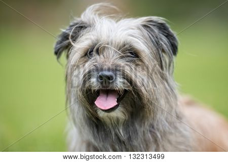 Happy And Smiling Dog