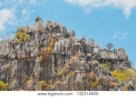 limestone mountains and tree up on rock cliff limestone