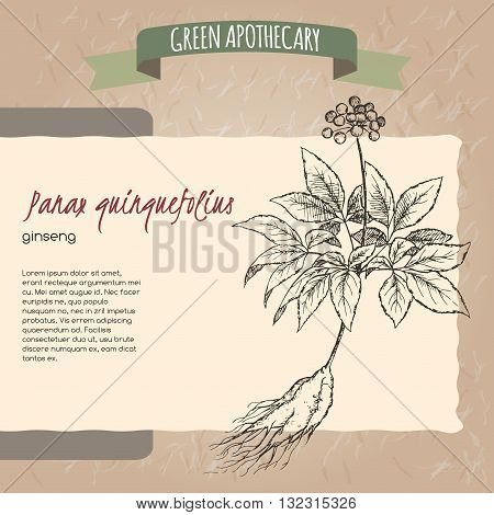 Panax quinquefolius aka Ginseng sketch. Green apothecary series. Great for traditional medicine, or gardening.