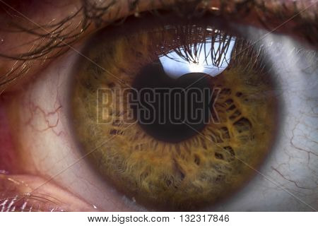 Macro extreme close up human eyeball background