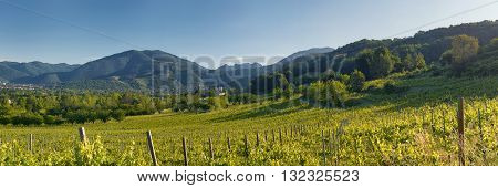 Hills and vineyards in northern Italy spring