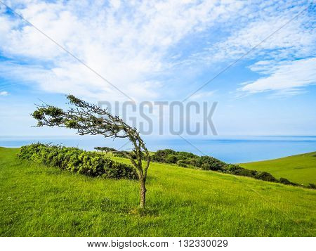 Single tree in windy day near Eastbourne, East Sussex, England