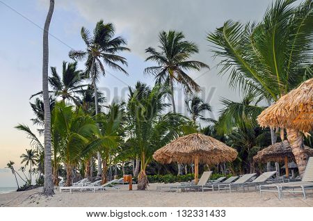 Caribbean resort beach dotted with palm trees thatched sunshade umbrellas and chairs