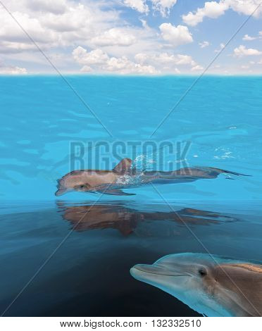 seascape with dolphins in turquoise sea waters under blue sky