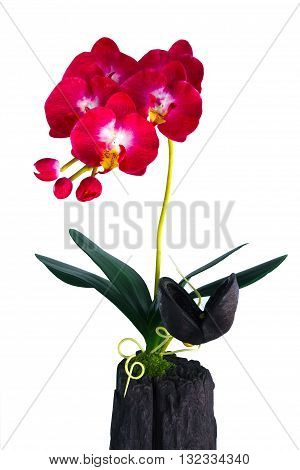 red orchid in a white flowerpot on white background.