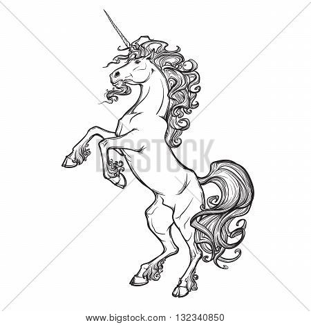 Unicorn standing on its hind legs as a traditional heraldry emblem. Heraldry element. Sketch isolated in white background. EPS10 vector illustration.