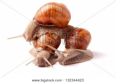 Three snail crawling on a white background closeup.