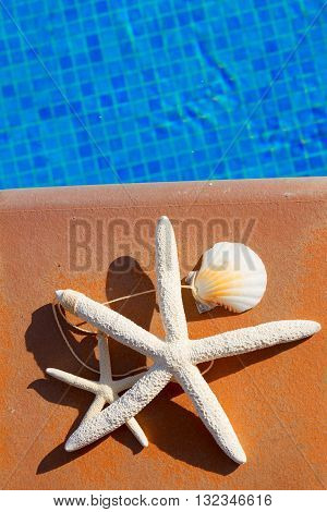 seashells and starfish near blue water of pool