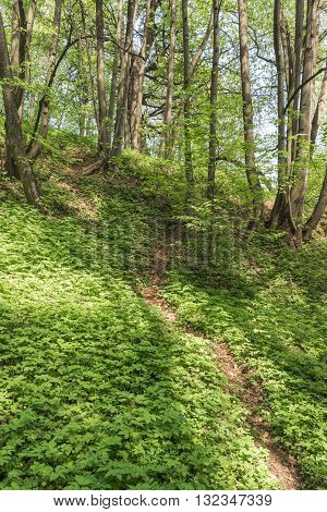 The footpath descends a steep slope among the lush spring greenery at the bottom of a deep ravine. Kolomenskoye Park. Moscow. Russia