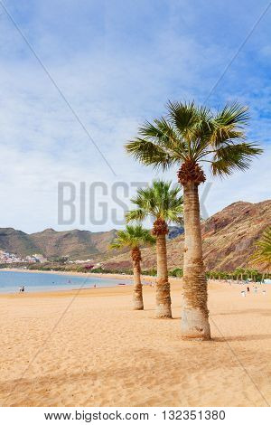 view of sandy beach Las Teresitas with palms at summer day, Tenerife island, Canarias Spain