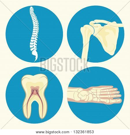 Set of medical icon, human spine icon, human tooth sign, human ankle joint, human shoulder joint, emblem or sign of medical diagnostic center or clinic, flat design, vector