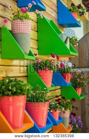 Colorful flower pots on small shelves on the wall.