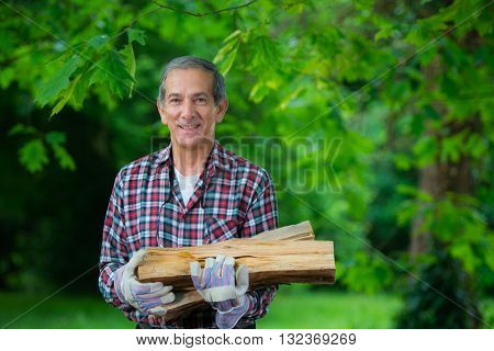Senior Man Carrying In His Arms The Firewood He Just Saw.