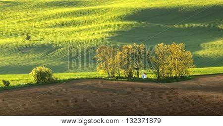 Summer field in evening light, evening sunlight