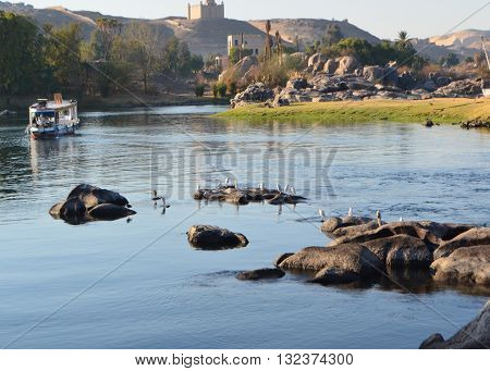 River Nile Cruises at Aswan Before Sunset