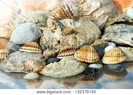 Macro photo of a group of seashells and pebbles on the seashore with the reflection of the sky