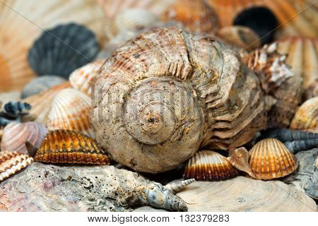 Macro photo of a spiral seashell with many shells on the background