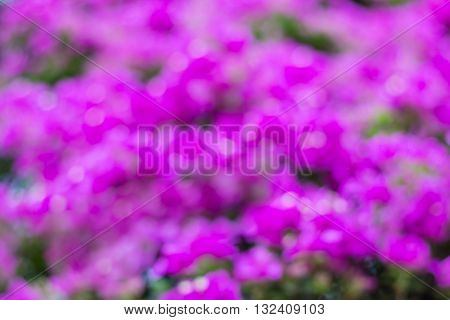 pink blur from bougainvillea tree, abstract, background
