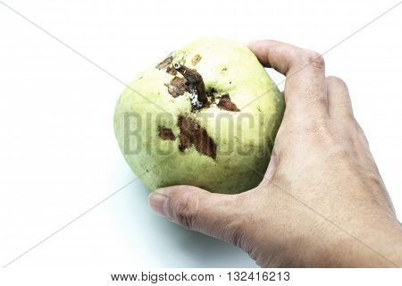 Guava fruit with brown marks in female hand, isolated on white background.