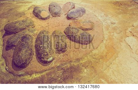 image of egg fossil dinosaur on rock background.