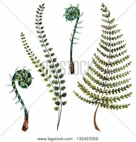Isolated beautiful watercolor hand drawn fern leaves