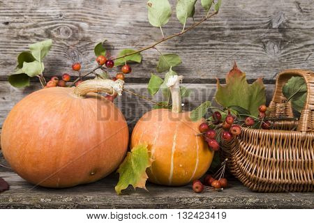 Pumpkins,basket And Fall Leaves