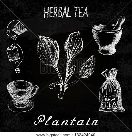 Plantain herbal tea. Chalk board set of vector elements on the basis hand pencil drawings. Herb Plantain tea bag mortar and pestle textile bag cup. For labeling packaging printed products
