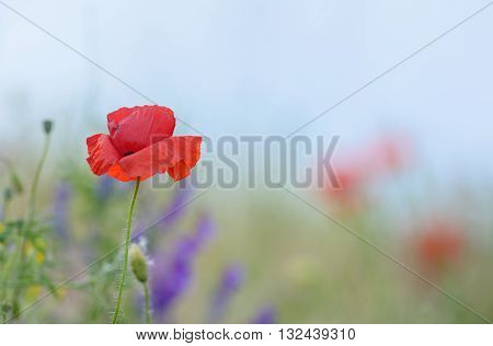 colorful flowers on field in summer, close up