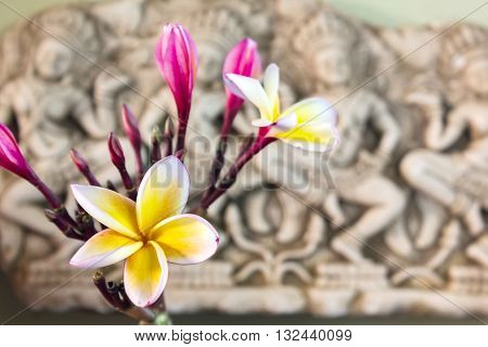 Beautiful White Yellow And Pink Flower Plumeria Or Frangipani Bunch In Asia  Boutique Style Backgrou