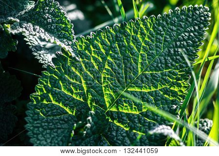 Fresh green spring leaf and grass closeup. Sun. Green plant. Abstract Nature Background. Green leaf texture.