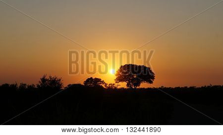 Sunrise in Kruger National Park in South Africa, foreground individual trees and bushes