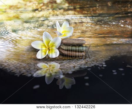 White And Yellow Fragrant Flower Plumeria Or Frangipani On Crystalline Water And Pebble Rock For Spa