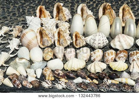 Seashells souvenirs for sale on the stand in Kuta Beach Bali Indonesie.